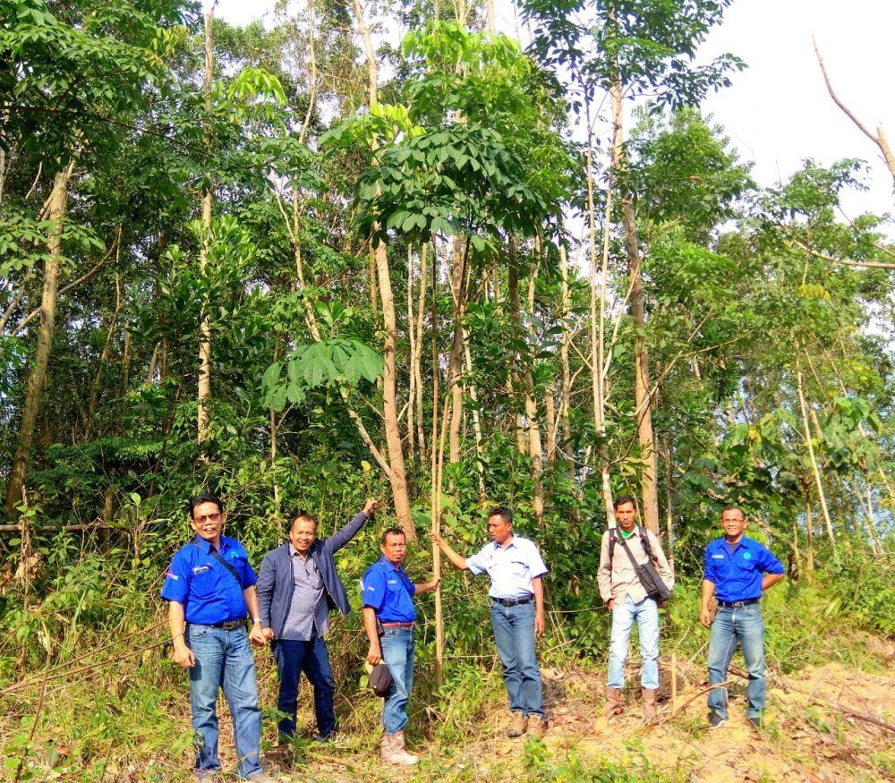 Pihak Perusahaan saat menunjukkan lokasi lahan PT AAS yang ditanami oleh warga dengan pohon karet.
