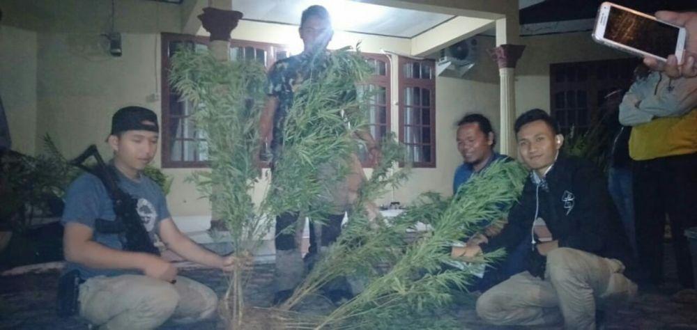 Polisi Temukan 2 Hektar Ladang Ganja di Kerinci
