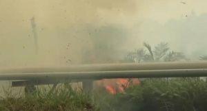 Luas Lahan Terbakar Capai 500 Hektar, Satgas akan Panggil Akak  Terkait Kebakaran  Dekat Pipa PetroC