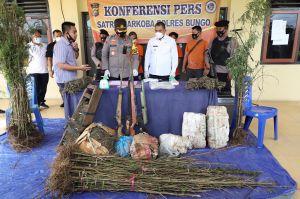 Polres Bungo Temukan Tiga Hektar Ladang Ganja di Limbur Lubuk Mengkuang