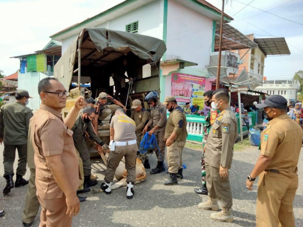 Petugas Pemkab Tebo menertibkan ternak warga yang berkeliaran di jalan-jalan protokol.
