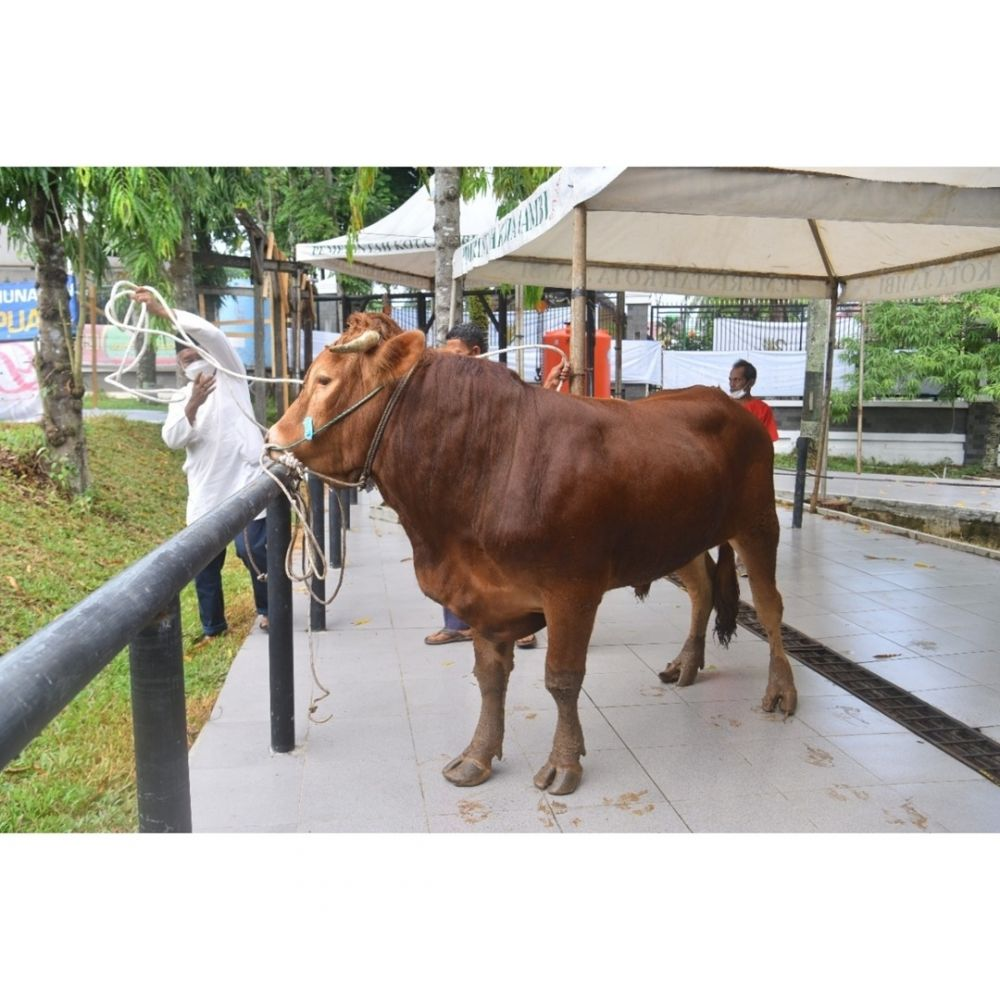 KURBAN: Salah satu hewan kurban yang dipotong pada peringatan Idul Adha beberapa hari lalu. Pemkot tidak menemukan masalah pada pengadaan hingga penyembelihan hewan kurban.