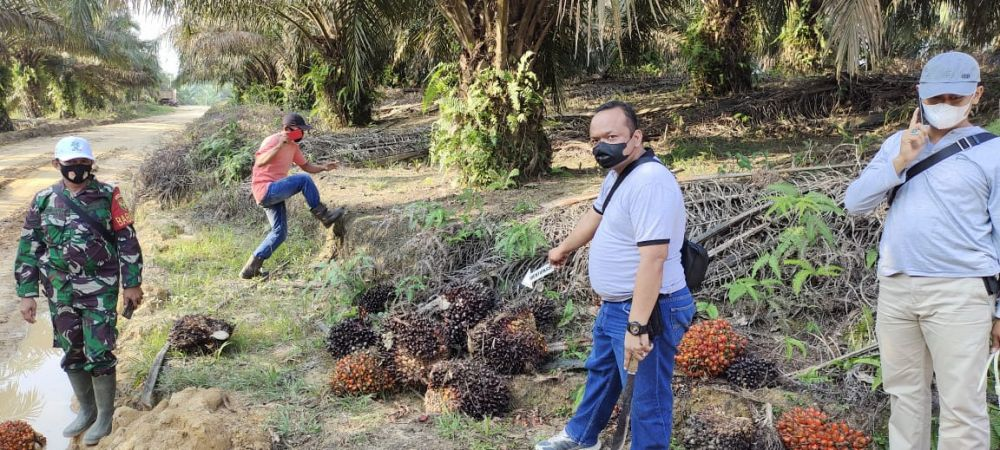 Polisi mengamankan barang bukti buah kelapa sawit curian